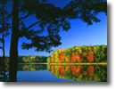 Stock photo. Caption: Red maple Guernsey Lake Pere Marquette State Forest Kalkaska County, Michigan -- maples tree trees tranquil calm calming lakes forests lower peninsula reflection reflections hardwood hardwoods northern upper midwest great lakes fall autumn landscape landscapes color colors brilliant balance quiet peaceful peace foliage excellence hope