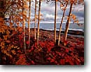 Stock photo. Caption: Aspen, Lake Superior Porcupine Mountains WildernessState Park Michigan -- united states america midwest great lakes landscape landscapes lake autumn fall wildernesses parks reddish upper peninsula foliage lakeshore lakeshores trees tree cloudy clouds