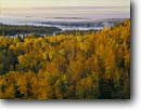 Stock photo. Caption: White spruce, paper birch and aspen Brule Lake Boundary Waters Canoe Area Superior National Forest,  Minnesota -- united states america midwest great lakes lake wildernesses parks canoeing forests wilderness wild autumn color colour colours colors fall yellow mixed hardwood landscape landscapes foliage distance view vista vistas views canoeing areas kayaking