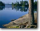 Stock photo. Caption: Cherokee Lake Boundary Waters Canoe Area Superior National Forest Minnesota -- pine pines lakes parks united states america summer north woods landscape landscapes back country wilderness wildernesses great shoreline lakeshore roots root