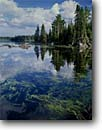 Stock photo. Caption: Clear Lake Boundary Waters Canoe Area Superior National Forest Minnesota -- pine pines lakes united states america summer north woods landscape landscapes backcountry wilderness wildernesses shoreline shorelines lakeshores clarity pristine clean water
