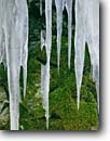 Stock photo. Caption: Icicles and moss,  Clearwater Lake Boundary Waters Canoe Area Superior National Forest Minnesota -- winter cold midwest midwestern states united america great lakes region closeups closeup detail details icicle frozen frigid canoeing areas