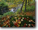 Stock photo. Caption: Sugar maple leaves,  Miller Creek Lincoln Park Duluth Minnesota -- united states america north woods landscape landscapes clean water creeks water flowing city autumn fall color colors colour colours midwest midwestern parks leafs leaves stream streams forest forests