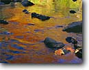 Stock photo. Caption: Sugar maple leaves Miller Creek  Duluth, Minnesota -- united states america detail stream reflection reflections creeks streams fall autumn shimmer water leaf river rock rocks abstract liquid colors colours colour