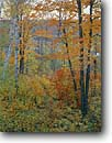 Stock photo. Caption: Beaver pond and mixed hardwoods Blacklock Nature Sanctuary   near Moose Lake Carlton County,  Minnesota -- midwest midwestern hardwood north woods forest forests country united states america autumn fall color colour colours colors ponds birch trees