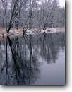Stock photo. Caption: Kettle River Banning State Park Pine County Minnesota -- hardwoods forests northern tree trees  upper midwest united states america  forests winter scenic cold freezing rivers reflections reflection parks landscape landscapes lined parks wintery snow snowy covered
