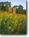 Stock photo. Caption: Goldenrod and rose hips Blue Mounds State Park Rock County Minnesota -- united states upper midwest midwestern wildflower wildflowers flowers america floral meadow meadows prairie prairies native grasses quartzite summer plant plants bloom parks