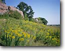 Stock photo. Caption: Goldenrod Blue Mounds State Park Rock County Minnesota -- united states upper midwest midwestern wildflower wildflowers flowers america floral meadow meadows prairie prairies native grasses quartzite summer