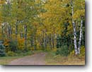 Stock photo. Caption: Birch-lined drive North Shore of Lake Superior Little Marais Township Minnesota -- lanes road roads tree trees hardwood forest forests midwest midwestern states united america backroad backroads autumn fall trail trails lanes lane country inviting tree trees lined drives landscape landscapes