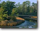 Stock photo. Caption: Smooth cordgrass and slash pines Davis Bayou Gulf Islands National Seashore Mississippi -- swamps area united states america seashores bayous creek creeks pine slough sloughs southeast southeastern deep south winter swamp water wetland wetlands habitat blue skies sunny clear scenic landscape landscapes  riparian
