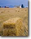 Stock photo. Caption: Ranch   near Bozeman Gallatin County Montana -- landscape landscapes scenic scenics scene barns building buildings summer wooden pastoral rural agriculture barns ranches ranchland ranching bales harvested harvesting haybales building buildings family farm values value hard working isolated isolation
