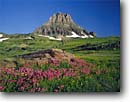 Stock photo. Caption: Lewis monkeyflower  and Clements Mountain,  Logan Pass Glacier National Park Rocky Mountains,  Montana -- wildflowers flowers peak peaks mimulus lewisii summer parks world heritage site sites alpine tundra wildflower meadow meadows summer monkeyflowers flower sweet elevation balance independence solitude landscapes landscape sunny blue clear scenics scenic