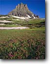 Stock photo. Caption: Red mountain heath & Clements Mountain Logan Pass Glacier National Park Rocky Mountains,  Montana -- wildflowers flowers peak peaks alpine tundra summer parks world heritage site sites wildflower meadow meadows floral bloom blooming rockies balance Phyllodoce empetriformis travel destination destinations vacation family landscape landscapes sunny clear