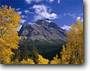 Stock photo. Caption: Black cottonwoods and  Little Chief Mountain   from Going-to-the-Sun Road Lewis Range,  Glacier National Park Rocky Mountains,  Montana -- united states america world heritage site sites fall autumn rockies peaks mountain parks tourist travel destination destinations aspen tree trees independence framed sunny clear blue landscape landscapes distance scenic scenics yellow foliage