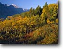 Stock photo. Caption: Aspens, Saint Mary Lake  and Little Chief Mountain     from Going-to-the-Sun Road Glacier National Park,  Lewis Range Rocky Mountains,  Montana -- world heritage site sites fall autumn rockies peaks lakes glacial carved parks landscape landscapes tourist travel destination destinations aspen tree trees pristine scenic sunny clear blue skies foliage scenic scenics fresh crisp quiet places