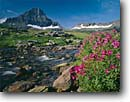 Stock photo. Caption: Lewis monkeyflower and Reynolds Mountain, Logan Pass Glacier National Park Rocky Mountains, Montana -- landscape landscapes scenic scenics scene summer rockies mountain parks vacation destination destinations water crisp clean refreshing fresh refreshed flowing Mimulus lewisii monkeyflowers sunny clear skies meadow meadows high world heritage site sites