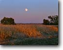Stock photo. Caption: Moonrise over cornfield near Broadwater North Platte River Valley Morrill County Nebraska -- cornfields field fields great plains farms agriculture corn fall Autumn   crop crops moon moons moonrises full sunset agricultural midwest landscape landscapes american westward expansion harvest harvesting food fuel clear evening light hope quiet calm