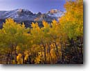 Stock photo. Caption: Aspens and Wheeler Peak Inner Basin Great Basin National Park Great Basin, Nevada -- sunrise sunrises parks united states southwest peaks aspen fall autumn color colors mountain mountains southwestern country landscape landscapes tourist travel destination destinations sunny clear blue foliage snow fall snowfall early covered scenics