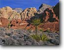 Stock photo. Caption: Mohave yucca,  Red Rock Canyon Red Rock Canyon National  Recreation Area Mojave Desert,  Nevada -- deserts redrocks red rock country rocks yuccas mountain hill hills tree trees mohave morning light united states america arid dry hot areas spring Yucca schidigera
