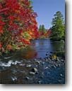 Stock photo. Caption: Eastern white pines and red maples   line the Ossipee River Effingham Falls,  Carroll County New Hampshire,  New England -- creek creeks rivers fall autumn tree trees color northern hardwood hardwoods stream streams northeast northeastern sunny bright colorful colors landscape landscapes fresh conifer conifers mixed forest forests rereflected light dramatic reflections foliage
