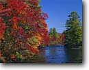 Stock photo. Caption: Eastern white pines and red maples   line the Ossipee River Effingham Falls,  Carroll County New Hampshire,  New England -- creek creeks rivers fall autumn tree trees color northern hardwood hardwoods stream streams northeast northeastern clear sunny bright colorful colors landscape landscapes fresh foliage conifers mixed forest forests rereflected light dramatic reflections