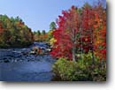 Stock photo. Caption: Eastern white pines & red maples   line the Ossipee River Effingham Falls Carroll County, New Hampshire -- creek creeks rivers fall autumn tree trees color northern hardwood hardwoods stream streams northeast northeastern clear sunny bright colorful colors landscape landscapes fresh foliage conifers mixed forest forests rereflected light dramatic