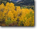 Stock photo. Caption: Aspens and Rio Santa Barbara Canyon Sante Fe Mountains Carson National Forest New Mexico -- forests plateaus tree trees fall autumn colors color united states america landscape landscapes pine aspen expansive scenic scenics vista vistas balance stunning distance majestic yellow
