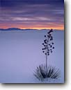 Stock photo. Caption: Soaptree yucca    and San Andres Mountains White Sands National Monument Chihuahuan Desert, New Mexico -- yuccas dune dunes sand desert mountains sunset park parks deserts gypsum lily monuments alone elata landscape landscapes purple adversity solitude isolation dramatic scneics scenic tenacity survivor pure destination destinations tourist quiet lonely