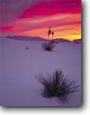 Stock photo. Caption: Soaptree yucca   and San Andres Mountains White Sands National Monument Chihuahuan Desert,  New Mexico -- yuccas dune dunes sand desert park parks deserts gypsum lily monuments  landscape landscapes adversity solitude isolation soft artistic nature solitude sunset sunsets isolation isolated balanced harmony graceful ripples purple rippled dramatic colorful