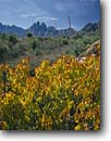 Stock photo. Caption: Mexican buckeye  and Organ Mountains Doña Ana County New Mexico -- united landscape landscapes clear scenic scenics scene canyons country   sunny clear grass grasslands buckeyes mountain fall autumn landmarks landmark yuccas yucca