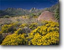 Stock photo. Caption: Sunflowers  and Organ Mountains Doña Ana County New Mexico -- united landscape landscapes clear scenic scenics scene canyons country   sunny clear grass grasslands mountain fall autumn landmarks landmark flowers flower sunflower yucca yuccas boulder skies blue desert blooming bloom