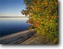 Stock photo. Caption: Swamp cyrilla and red maples Catfish Lake Croatan National Forest North Carolina -- united park southern appalachian states america parks trees mountain national landscapes landscape travel tourist destination destinations lakes clear sunny blue skies lakeshore lakeshores autumn fall beach beaches southern south southeast