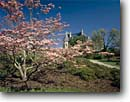 Stock photo. Caption: Pink dogwood Biltmore Estate Asheville North Carolina -- attraction attractions northern landscape landscapes buildings building summer houses destinations sunny clear blue opulence luxury wealth historic landmarks landmark historical flowering estates famous east mansion mansions tourist opulent