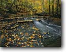 Stock photo. Caption: Sugar maples and Bridal Veil Creek Bedford Reservation,  Metroparks Cuyahoga Valley National Park Cuyahoga County,  Ohio -- creeks stream streams fall autumn color maples tree trees cloudy hardwood forest forests parks midwest midwestern united states landscapes landscape travel tourist destination destinations cascade cascades woodland quiet foliage scenic scenics city cities
