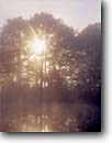 Stock photo. Caption: Red oaks Tinkers Creek State Park Portage County Ohio -- oak sunburst sunbursts sunrise sunrises mist misty summer parks midwest midwestern united states america pond ponds tree trees moody artistic nature foggy light soft reflection reflections beam beams rays sunrays sunbeam sunbeams sunray