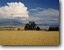 Stock photo. Caption: Wheatfields near Summerville Grande Ronde Valley Oregon -- rural landscape landscapes ranch ranching ranchland agriculture wheat grain grains barn barns harvest time abundance abundant farming farm crop crops field fields pacific northwest northwestern pride living buildings building amber waves dramatic clouds