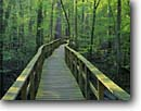 Stock photo. Caption: Congaree Swamp   from the Boardwalk Congaree Swamp National Park South Carolina -- swamps trail trails boardwalks trees tree forest forests hardwood hardwoods spring soft light Parks south southern southeast southeastern virgin ancient path pathway paths bridge bridges hiking wooden through inviting wetland wetlands direction guidance
