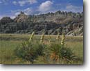 Stock photo. Caption: Soapweed   and badlands Badlands National Park South Dakota -- great plains short grass prairie  summer united states america landscape landscapes badland parks yucca erosion eroded midwest midwestern prairies native plants habitat soapweeds yuccas blooming bloom