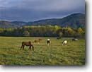Stock photo. Caption: Horses Cades Cove Great Smoky Mountains National Park Tennessee -- attraction attractions landscape landscapes scenic scenics destinations parks destination horse livestock grazing autumn fall pasture pastureland ranch ranching traditional animal animals family tourist vacation world heritage site sites