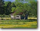 Stock photo. Caption: Old Homestead near Woodbury Cannon County Tennessee -- tree trees southern southeastern united states america southeast shack shacks homesteads flower flowers wildflowers wildflowers abandoned transitory weathered isolation house houses settler settlers sunny spring clear blue solitude isolation secluded