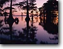 Stock photo. Caption: Bald cypress at sunrise Reelfoot Lake Reelfoot Lake State Park  Tennessee -- cypresses sunrises lakes parks southern southeastern swamp swamps reflection refections seascape seascapes travel tourist destination destinations perfect dream simple wetland wetlands faith lazy landscape landscapes sunny clear calm quiet places simple