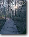 Stock photo. Caption: Boardwalk   in morning light Big Thicket National Preserve Texas -- united peaceful calm calmingtrees morning light deep south southern states america lowcountry trail trails path pathways boardwalks inviting preserves