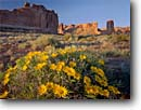 Stock photo. Caption: Rough mulesears Courthouse Towers Arches National Park Colorado Plateau, Utah -- sunflowers flowers flower wildflower wildflowers meadow spring plateaus  scenic scenics landscapes Wyethia scabra blooming bloom landscape with mules ears sunny clear blue skies geologic formations formation named landmark landmarks scenics scenic yellow