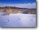 Stock photo. Caption: Hoarfrost on deer tracks in snow Devil