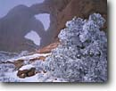Stock photo. Caption: Double Arch and Utah juniper in fog Windows District Arches National Park Colorado Plateau, Utah -- united states america desert deserts red rock canyons country plateaus spiritual landscape landscapes tourist travel destination destinations arches buttes canyon cold strength snow ethereal family vacation sandstone winter slickrock off season