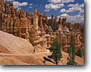 Stock photo. Caption: Ponderosa pines, Bryce Ampitheater Peekaboo Loop Trail Bryce Canyon National Park Colorado Plateau,  Utah -- tree trees pine sandstone summer country parks rock landscape landscapes tourist hiking hiker hikers destination destinations solitude tenacity arid plateaus spire spires hoodoo hoodoos trails woman women people person sunny blue skies clear puffy clouds