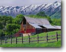 Stock photo. Caption: Barn below Wellsville Mountains Mendon, Cache Valley Great Basin,  Utah -- barns mountain summer snow capped wooden tree trees fence green grass field ranch ranches ranching country clear sunshine sunny barnyard yard countryside rural americana america united states america state pastoral rickety