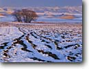 Stock photo. Caption: Plowed field in winter   and Bear River Range Cache Valley Great Basin, Utah -- fields agriculture snow tree trees willow willows mountains ranges farm farms farmland united states america cold inter mountain intermountain crop crops farming