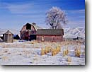 Stock photo. Caption: Farmyard in winter Trenton Cache Valley Utah -- barns mountain snow capped wooden tree trees ranch ranches ranching country barnyard snow countryside rural americana united states america state rustic farms sunny clear blue skies landscape landscapes building buildings barn houses house outbuildings