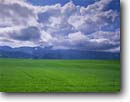 Stock photo. Caption: Fields of grain   below Wellsville Mountains Cache Valley Utah -- green planted field fields hay farm farms farming farmland farmlands ranch ranches ranching agriculture spring mountain mountains united states america harvest harvesting bucolic green blue white clouds